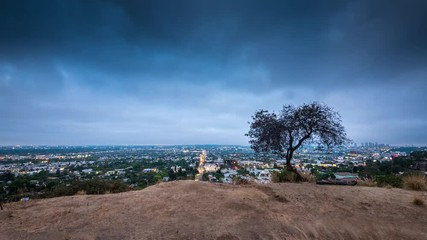 Fototapete - Lone tree Los Angeles Hollywood Hills night city skyline cityscape. 4K timelapse