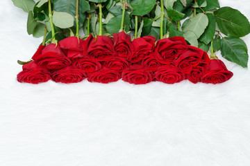 Big bouquet of red roses on white fur