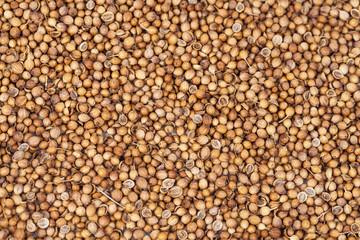 dry Coriander herb on texture background.