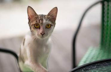 A Cat make eye contact