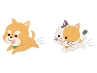 走り回るペットの犬と猫