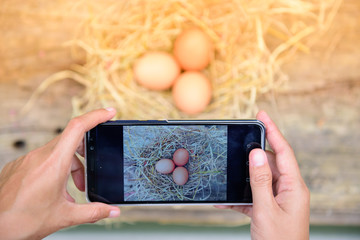The smart farmer use smart phone technology to sell eggs.