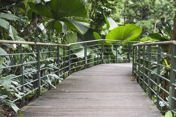 tropical forest pathway