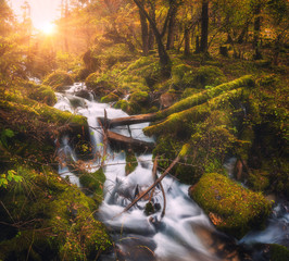 Foto auf Leinwand Wasserfalle Colorful green forest with little waterfall at mountain river at sunset in autumn. Landscape with stones covered green moss in water, trees, waterfall and vibrant foliage. Nature. Blurred water