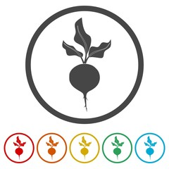Sugar beet icon, 6 Colors Included