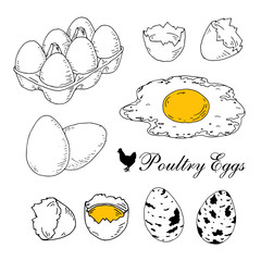 Poultry eggs collection. Fresh, in box, boiled, scrambled eggs. Hand drawn line art vector illustration
