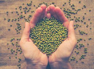 Mung beans in burlap. Ingredient for healthy vegetarian meals. Toning.