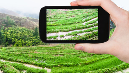 tourist photographs rice beds on terraced field