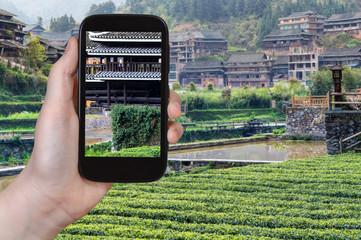 tourist photographs tea plantation in Sanjiang