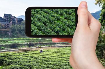 tourist photographs tea plantation in Chengyang