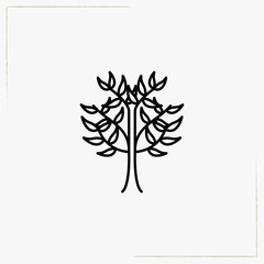 coffee tree line icon