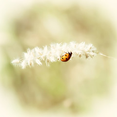 Ladybird on the plant, retro filter
