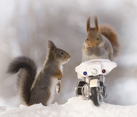 red squirrels with a police motor cycle