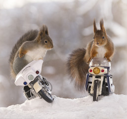 red squirrels sitting on police motor cycles