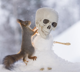 red squirrel with an skull snowman