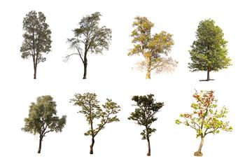 Tree group isolated on white background.