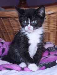 CUTE BLACK AND WHITE KITTEN