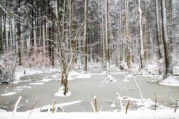 Frozen pond in a snowy landscape
