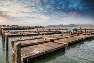 des phoques sur les ponyons de San Francisco