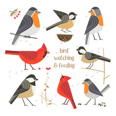 Birdwatching, bird feeding icon set. Red Northern cardinal, robin, chikadee pose. Comic flat cartoon. Wild birds, nest, seeds. Minimalism simplicity design. Wildlife banner sign vector illustration