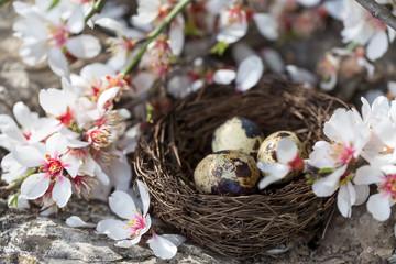 Quail eggs and blossom