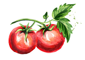 Red tomatoes composition. Watercolor hand drawn illustration, isolated on white background