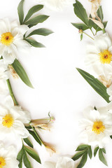 Frame made of white peonies, big leaves of iris isolated on white background. Flat lay, top view.