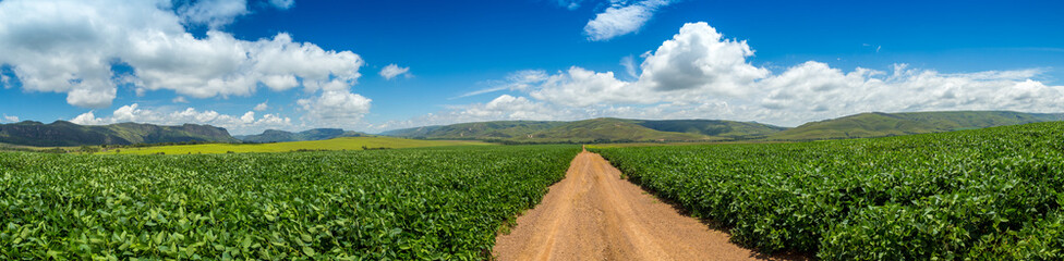 soybean plantation road montain brazil