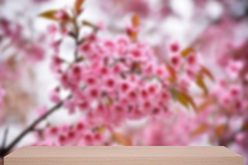 wild himalayan cherry flower defocus background with wood shelf
