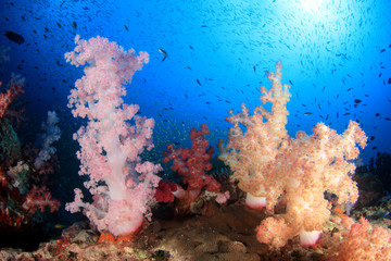 Deurstickers Onder water Fish on coral reef underwater