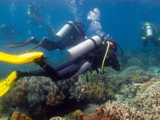 aqualungers swim over a corals, undersea Philippines