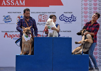 Dog owners get their dogs on the podium to pose for a picture after they participated in a dog show in Guwahati