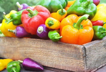 Colorful fresh harvested bell peppers, pile of homegrown organic vegetables, selective focus