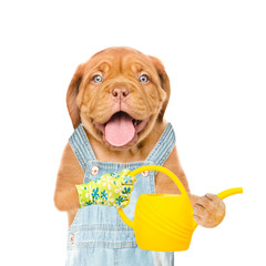 Funny dog farmer with a watering can. isolated on white background