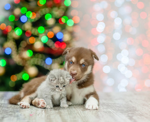 Husky puppy licking kitten on a background of the Christmas tree