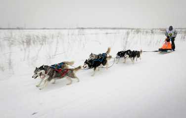 A musher is pulled by a team of dogs during a sled and skijoring race outside Almaty
