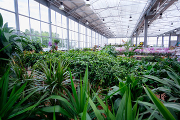 plants and flowers in modern greenhouse