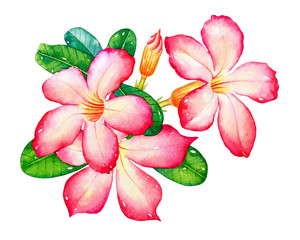 Watercolor illustration of the pink tropical flowers with green leaves isolated on white background.