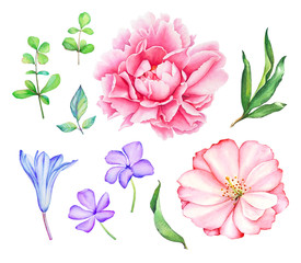 Watercolor hand drawn floral collection with leaves, blue berries and flowers isolated on white background.