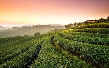 Tea Plantation Click Wall mural