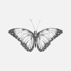 Illustration drawing style butterfly