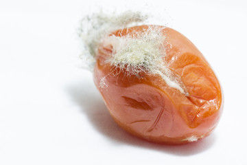 Spores of mold on a red tomato.