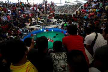 People watch a cockfighting match with the highest cash reward of cockfighting in Thai history for more than one million USD at a stadium on the outskirts of Bangkok