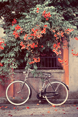 Tuinposter Fiets bicycle with red flowers in the background, a bike leans against the wall picture vintage effect