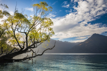 Beautiful Morning Light at Wilson Bay with a willow tree leaning over the water , New Zealand.