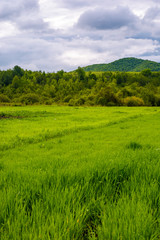 grassy field near the forest in mountains. lovely rural scenery on overcast day