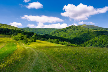 grassy rural fields on mountain slopes. country road runs uphill in to the forest. beautiful landscape at the foot of Pikui mountain. fine summer weather with fluffy clouds on a blue sky