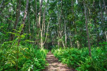 Jozani forest. Zanzibar, Tanzania.
