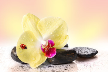 Yellow orchids and pebbles with ladybug.