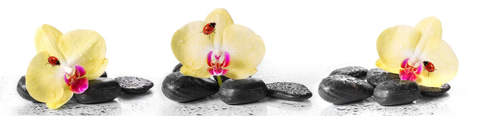 Photo sur Plexiglas Orchidée Yellow orchids and pebbles with ladybug. Panoramic image.